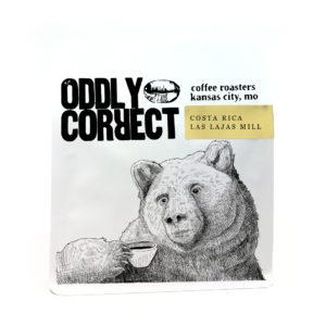 oddly correct costa rica natural bear
